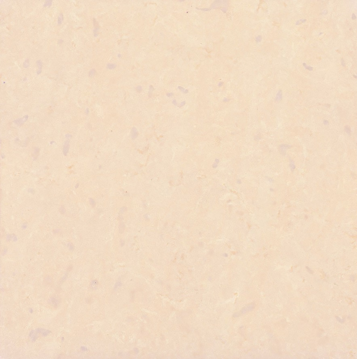 Color Palette - Eden Valders Stone